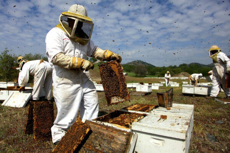video hive collapse articleLarge v