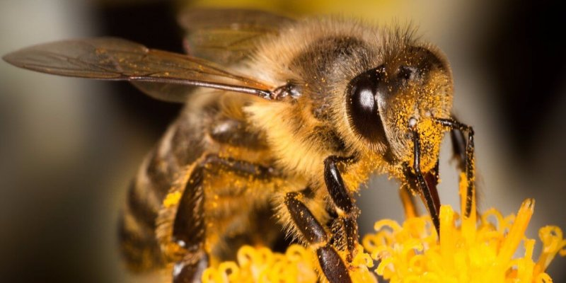 what to do when your kid gets a bee sting