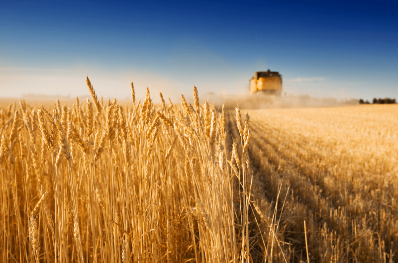 wheatharvestback