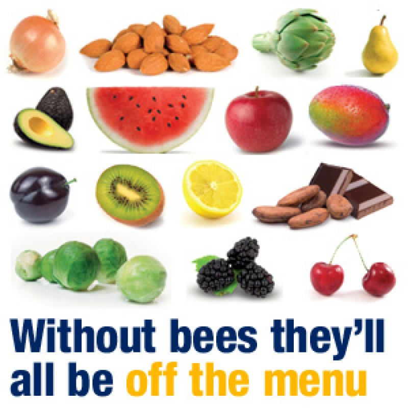 without bees they d all be off the menu