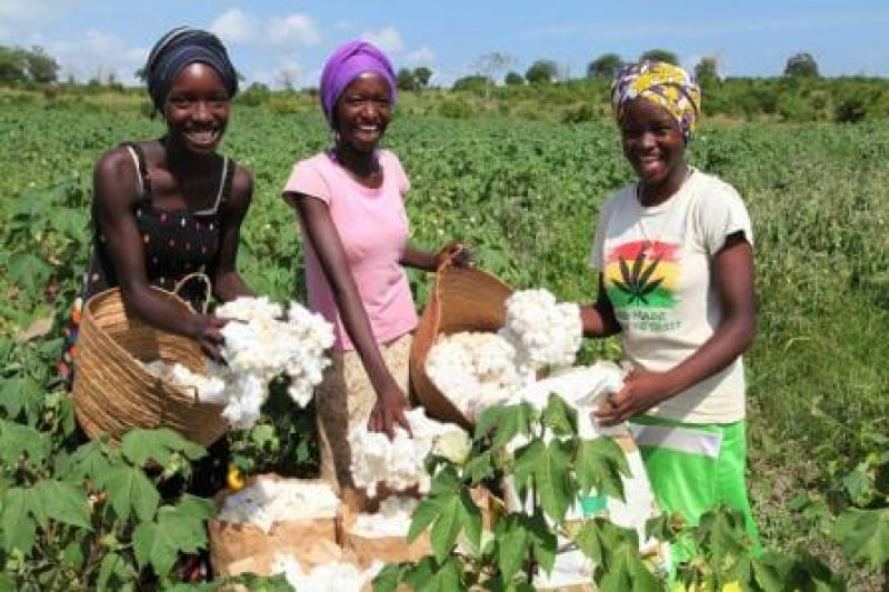 women picking cotton