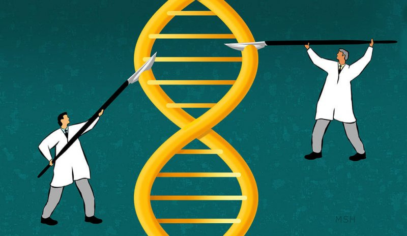 yalenews editing genomes msh