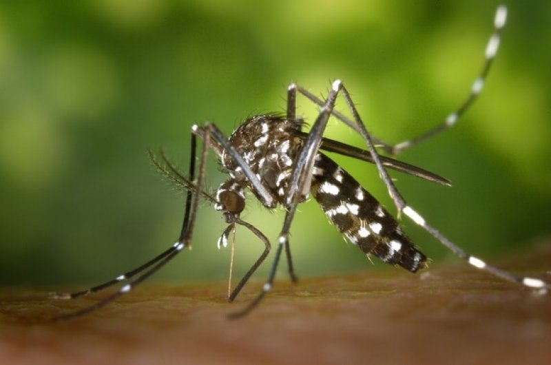 zika virus aedes mosquito